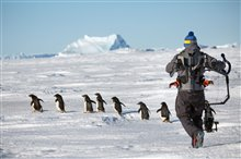 Pingouins Photo 16