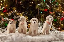 Santa Paws 2: The Santa Pups photo 3 of 8