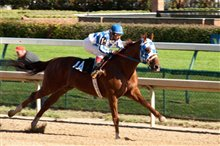 Secretariat photo 16 of 25