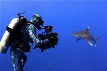 Sharkwater Extinction - Le film Photo 5