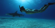 Sharkwater Extinction - Le film Photo 18