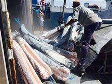 Sharkwater Extinction - Le film Photo 20