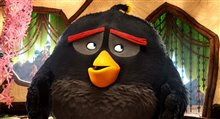 The Angry Birds Movie photo 6 of 45