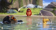 The Angry Birds Movie photo 15 of 45