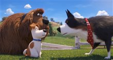 The Secret Life of Pets 2 Photo 4