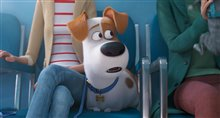 The Secret Life of Pets 2 Photo 16