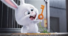 The Secret Life of Pets Photo 4