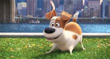 The Secret Life of Pets Photo 16