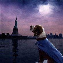 Underdog Photo 17