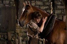 War Horse Photo 8