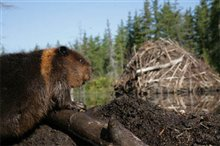 White Tuft, The Little Beaver Photo 4