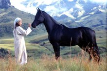 Young Black Stallion photo 3 of 4