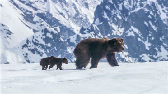 Bears Photo 2 - Large