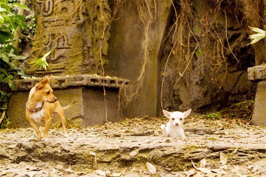 Beverly Hills Chihuahua Photo 9 - Large