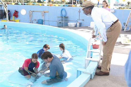 Dolphin Tale Photo 22 - Large