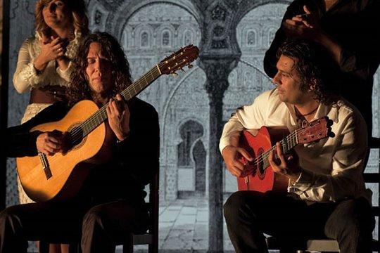 Flamenco, Flamenco Photo 22 - Large