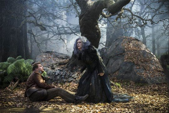 Into the Woods Photo 8 - Large