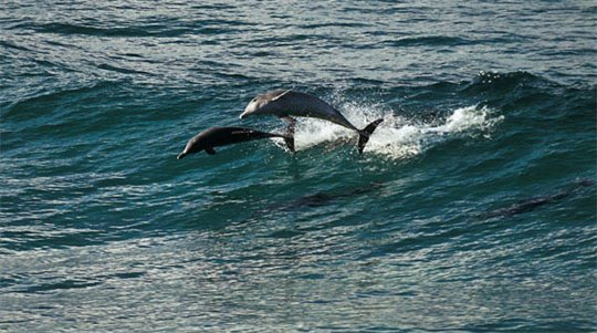 Oceans Photo 10 - Large