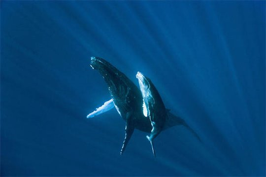 Oceans Photo 17 - Large