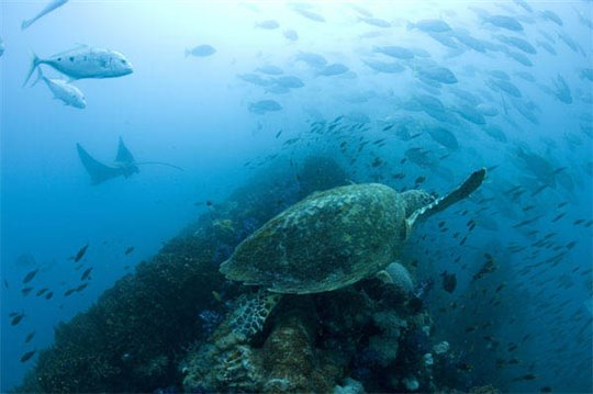 Oceans Photo 19 - Large