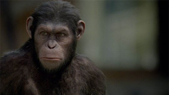 Rise of the Planet of the Apes Photo 14 - Large