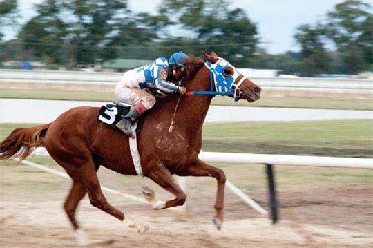 Secretariat Photo 20 - Large