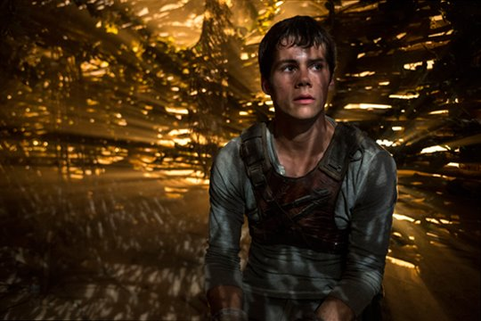 The Maze Runner Photo 4 - Large