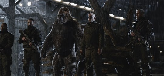 War for the Planet of the Apes Poster Large