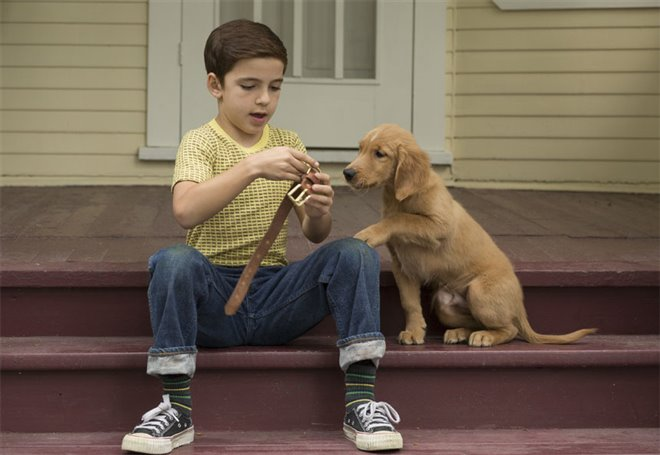 A Dog's Purpose Photo 10 - Large