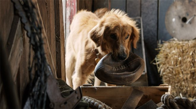 A Dog's Purpose Photo 13 - Large