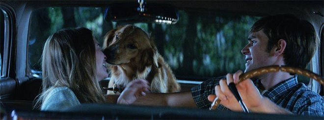 A Dog's Purpose Photo 18 - Large