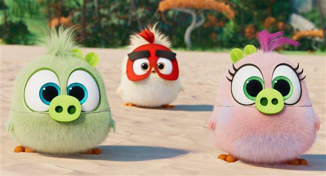 Angry Birds : Le film 2 Photo 7 - Grande