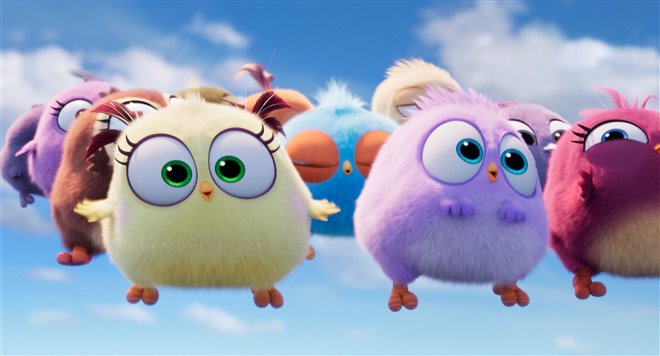 Angry Birds : Le film 2 Photo 13 - Grande