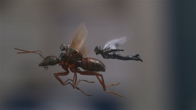 Ant-Man and The Wasp Photo 7 - Large