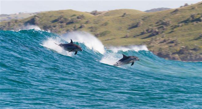 Dolphin Reef (Disney+) Photo 1 - Large