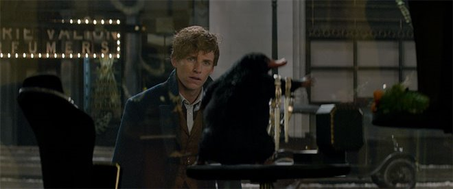 Fantastic Beasts and Where to Find Them Photo 34 - Large