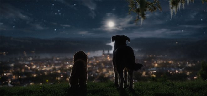 Lady and the Tramp (Disney+) Photo 6 - Large
