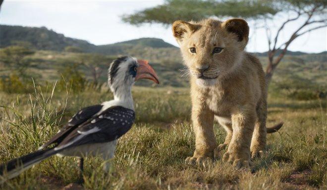 Le roi lion Photo 2 - Grande