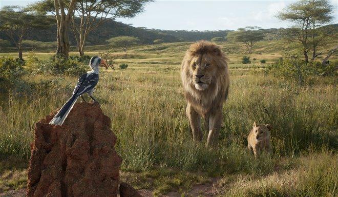 Le roi lion Photo 17 - Grande