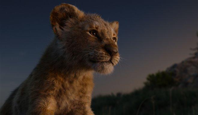 Le roi lion Photo 24 - Grande