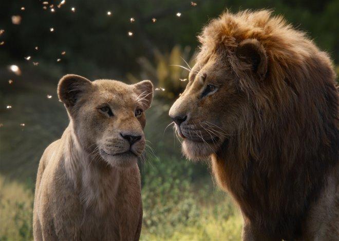 Le roi lion Photo 28 - Grande