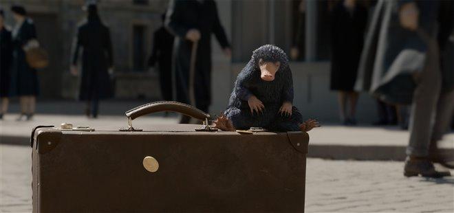Les animaux fantastiques : Les crimes de Grindelwald Photo 42 - Grande