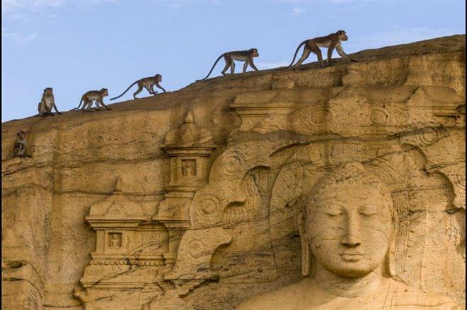 Monkey Kingdom Photo 1 - Large