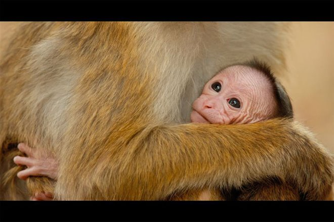 Monkey Kingdom Photo 3 - Large