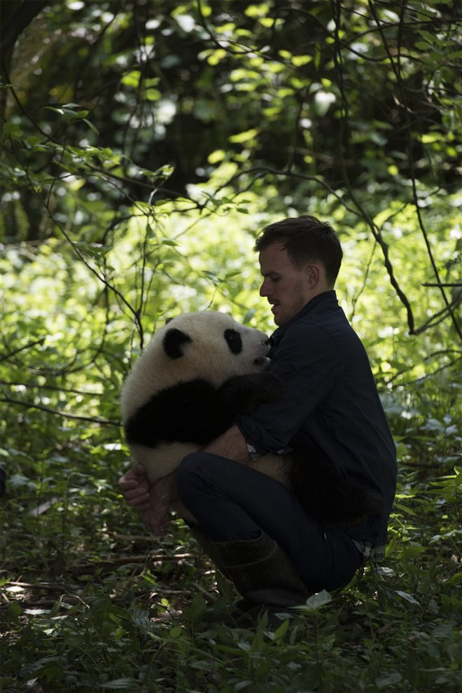 Pandas Photo 23 - Large