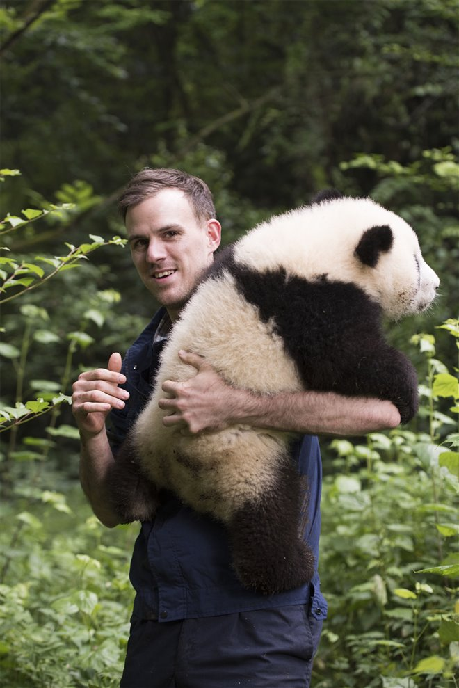 Pandas Photo 25 - Large