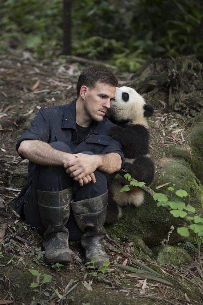 Pandas Photo 26 - Large