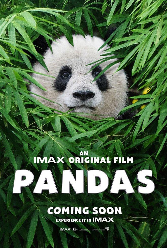 Pandas Photo 32 - Large