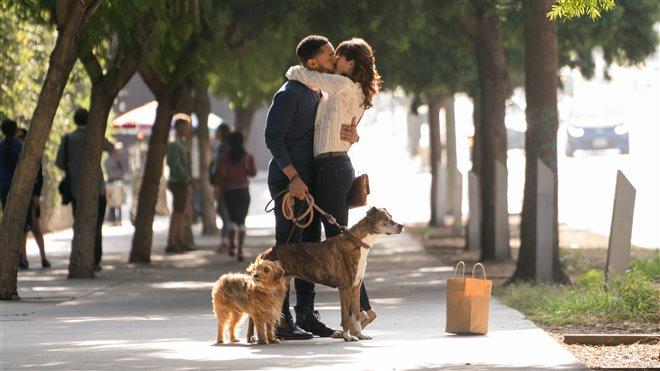Par amour des chiens Photo 2 - Grande