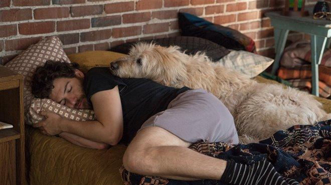 Par amour des chiens Photo 6 - Grande